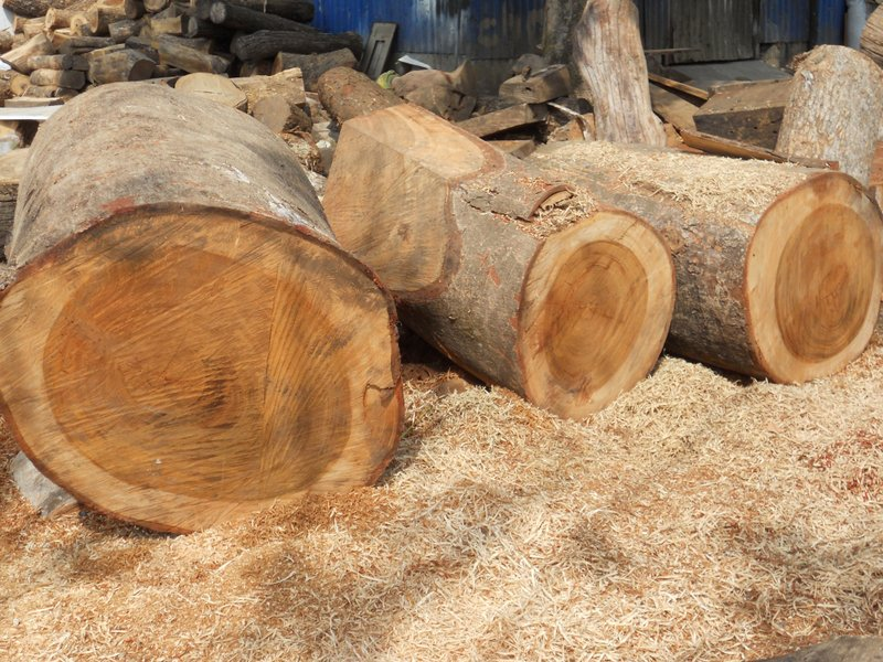Raw logs before milling